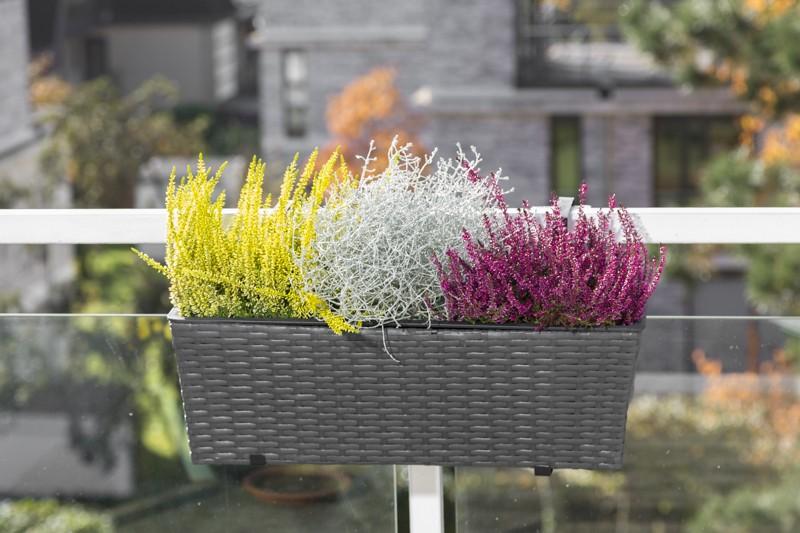 Blumenkasten Merxx Polyrattan anthrazit